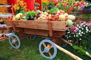 healthy wagon